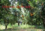 Tuyển nam nữ chăm sóc vườn bao ăn bao ở tại TP HCM