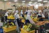 Tuyển công nhân sản xuất bánh kẹo bao ăn ở tại TP HCM