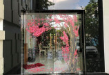 Vẽ tranh kính trang trí Tết 2021 hoa đào hoa mai