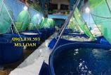 Thùng nhựa nuôi cá 1500L hình tròn, bể nhựa nuôi dưỡng cá Koi. lh 0963.839.593 Ms.Loan